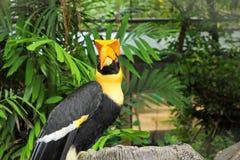 Vogel auf Baum in der Natur Stockbild