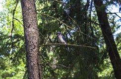 Vogel auf Baum in Kanada Lizenzfreie Stockfotografie