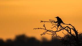 Vogel auf Baum Schattenbild Lizenzfreies Stockfoto