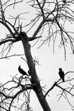 Vogel auf Baumastschattenbild ohne Urlaub Stockfoto