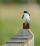 Vogel auf Birdhouse Lizenzfreie Stockfotografie