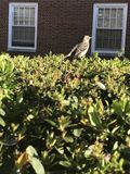 Vogel auf Bush Lizenzfreies Stockfoto