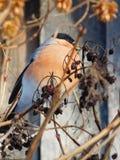 Vogel auf dem Baum Lizenzfreie Stockfotografie