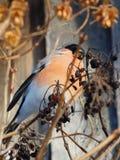 Vogel auf dem Baum Lizenzfreies Stockbild