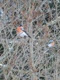 Vogel auf dem Baum Lizenzfreie Stockbilder