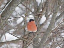 Vogel auf dem Baum Stockfoto