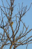Vogel auf dem Baum 3 stockbilder