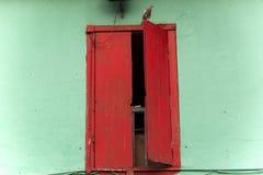 Vogel auf dem Fenster Lizenzfreies Stockfoto