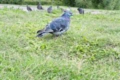 Vogel auf dem Gras Stockbilder
