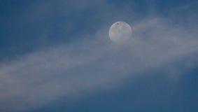Vogel auf dem Mond Stockbild