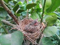 Vogel auf dem Nest Lizenzfreies Stockfoto