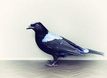 Vogel auf dem Parkett Stockbild