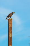 Vogel auf dem Pfosten Stockbild