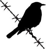 Vogel auf dem Stacheldraht Lizenzfreie Stockfotografie