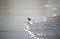 Vogel auf dem Strand Lizenzfreies Stockbild