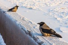 Vogel auf dem Winterdamm Lizenzfreies Stockfoto
