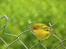Vogel auf dem Zaun lizenzfreies stockbild