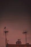 Vogel auf der Antenne lizenzfreies stockfoto
