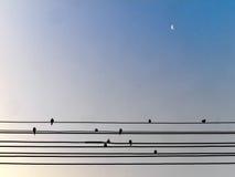 Vogel auf Draht stockfotografie