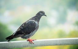 Vogel auf The Edge Lizenzfreie Stockfotografie