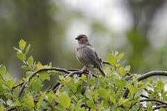 Vogel auf einem Baum Stockfotografie
