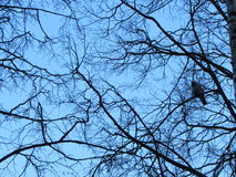 Vogel auf einem Baum Lizenzfreies Stockbild