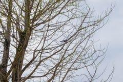 Vogel auf einem Baum Stockfoto