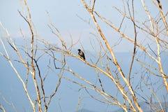 Vogel auf einem bloßen Baum Lizenzfreie Stockfotografie