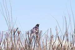 Vogel auf einem Busch Lizenzfreie Stockbilder