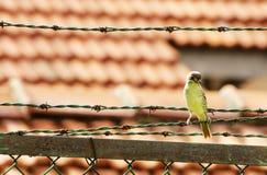 Vogel auf einem Draht Lizenzfreies Stockbild