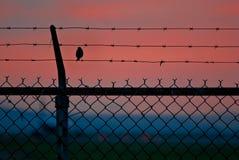 Vogel auf einem Draht-Zaun Lizenzfreies Stockfoto