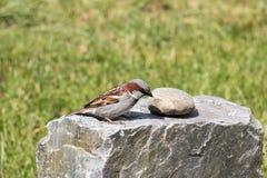 Vogel auf einem Felsen Lizenzfreies Stockbild