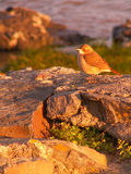 Vogel auf einem Felsen bei Sonnenuntergang, Stockfoto