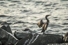 Vogel auf einem Felsen lizenzfreie stockfotos
