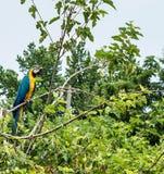 Vogel auf einem Glied lizenzfreies stockfoto