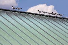 Vogel auf einem heißen Zinndach Stockfoto