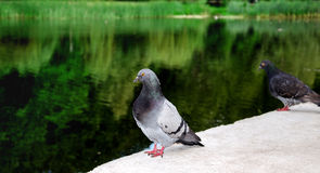 Vogel auf einem Hintergrund von See lizenzfreies stockbild