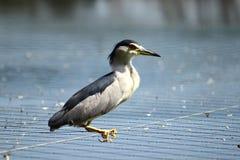 Vogel auf einem Netz Lizenzfreies Stockbild