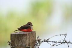 Vogel auf einem Pfosten lizenzfreie stockbilder