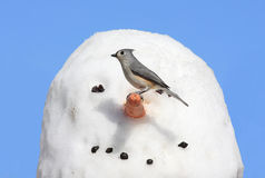 Vogel auf einem Schneemann Lizenzfreie Stockfotos