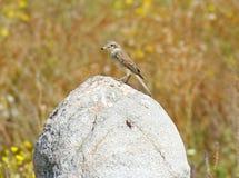 Vogel auf einem Stein Stockbild