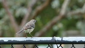 Vogel auf einem Zaun stock footage