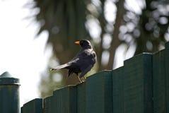 Vogel auf einem Zaun Lizenzfreies Stockbild