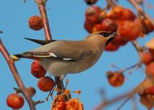 Vogel auf einem Zweig Lizenzfreies Stockbild