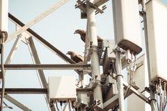 Vogel auf einer Hochspannungsfernleitung Vögel erhalten nicht entsetzt, wenn sie auf elektrischen Drähten als beide der Füße a de lizenzfreie stockfotografie
