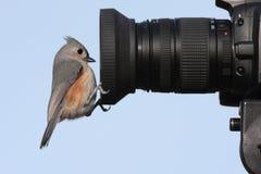 Vogel auf einer Kamera Lizenzfreies Stockbild