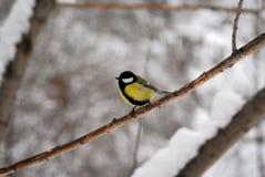 Vogel auf einer Niederlassung Lizenzfreie Stockfotografie