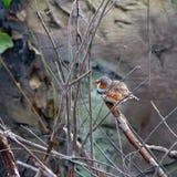 Vogel auf einer Niederlassung Lizenzfreies Stockfoto