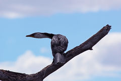 Vogel auf einer Niederlassung Stockbild