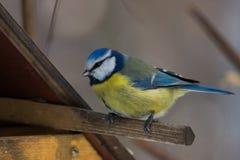 Vogel auf einer Niederlassung Lizenzfreies Stockbild